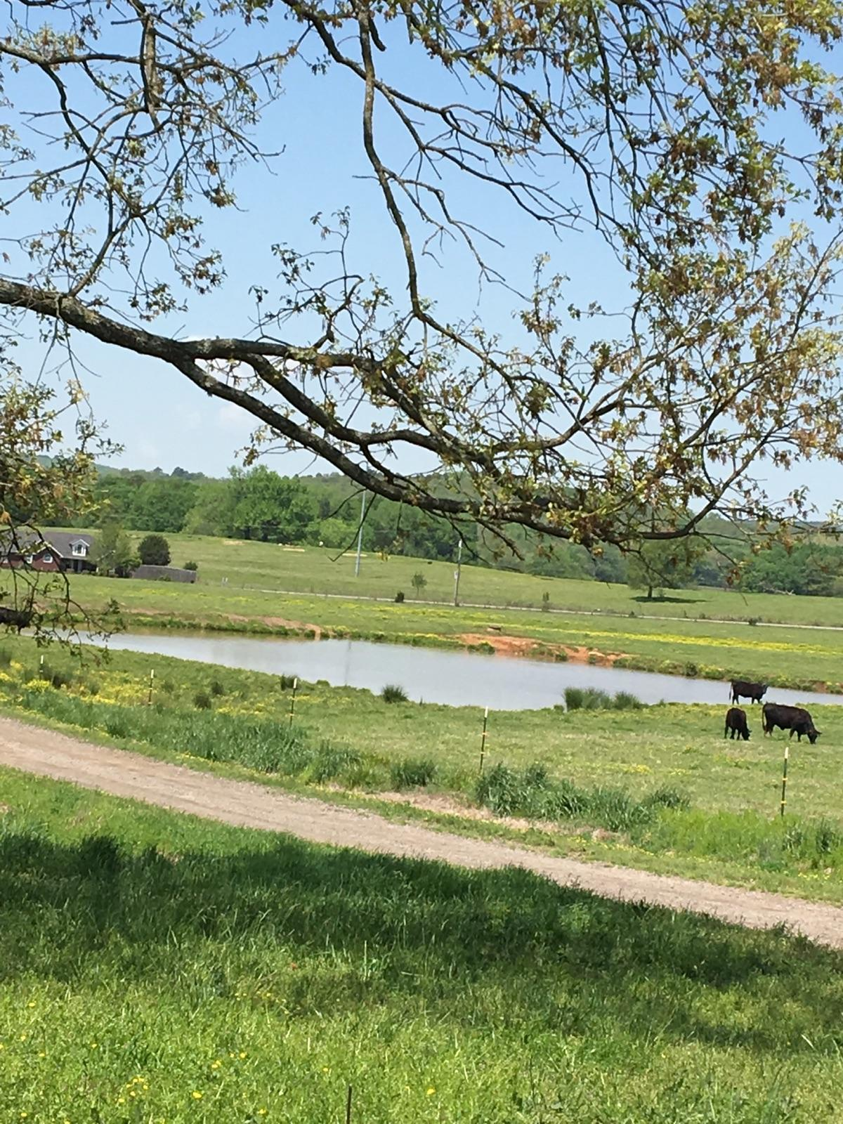 Large photo 55 of home for sale at 508 Ray Road, Clarksville, AR