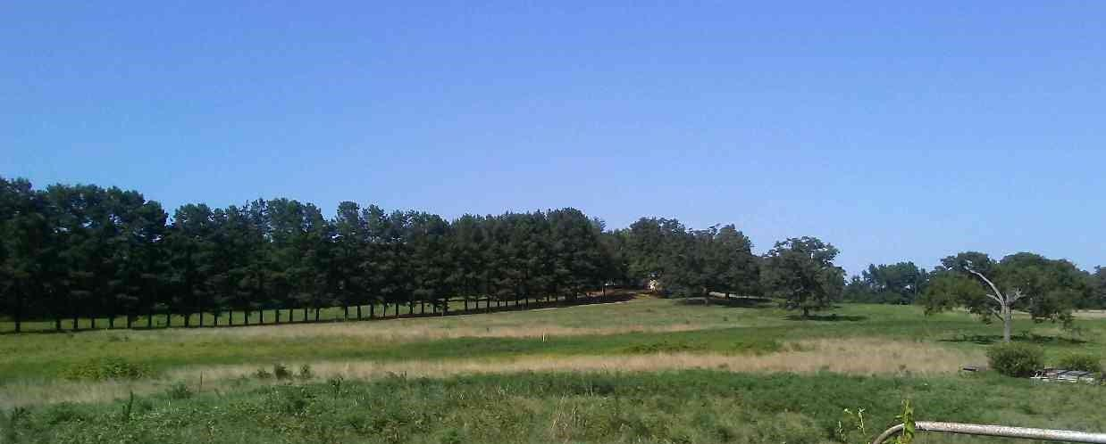 Large photo 40 of home for sale at 610 Ray Road, Clarksville, AR