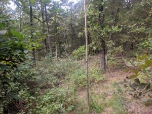 191 Sims Hollow Road, Russellville, AR 72802