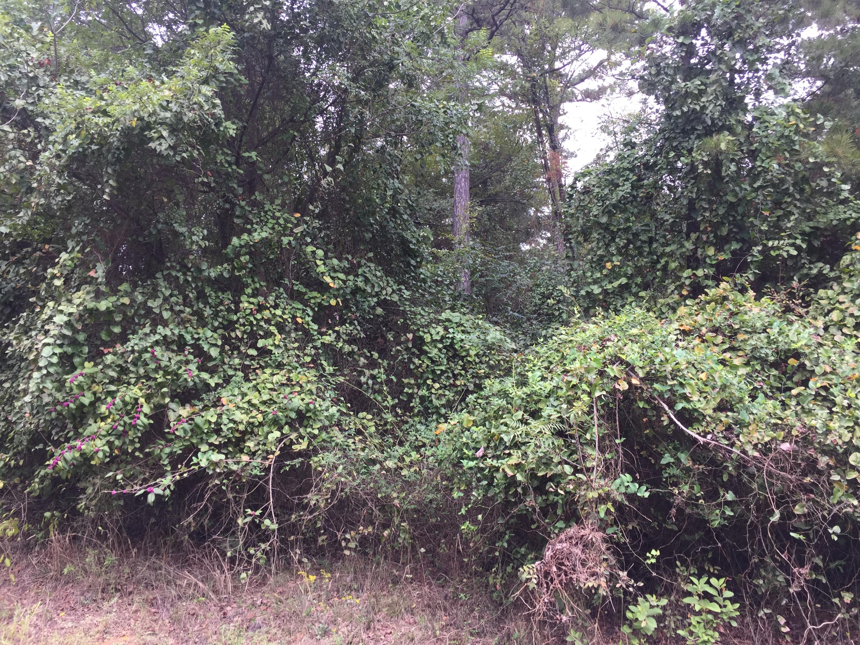 Large photo 3 of land for sale at  Eagle's Nest Subdivision , London, AR, listed by Coldwell Banker Premier Realty