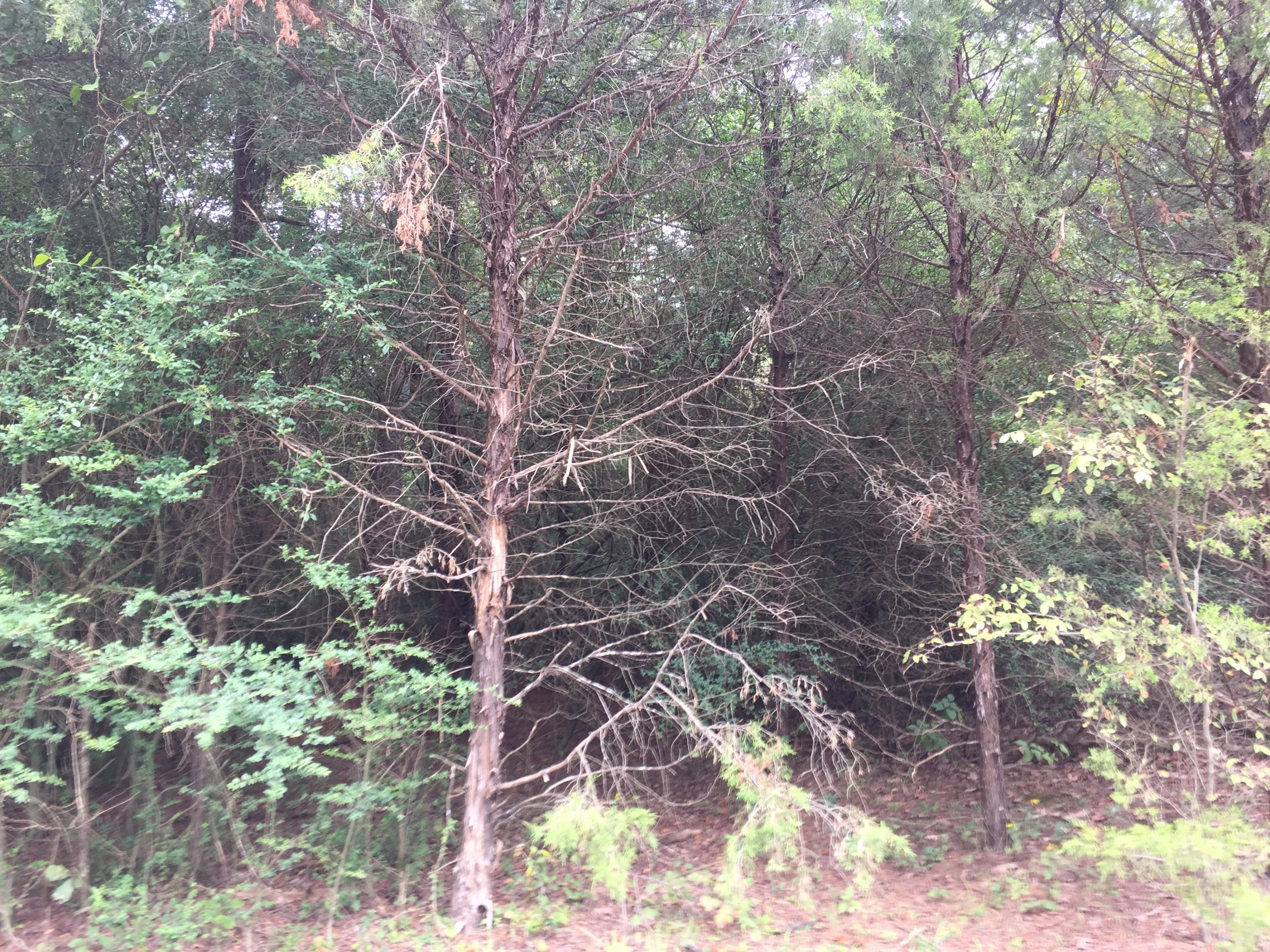 Large photo 6 of land for sale at  Eagle's Nest Subdivision , London, AR, listed by Coldwell Banker Premier Realty