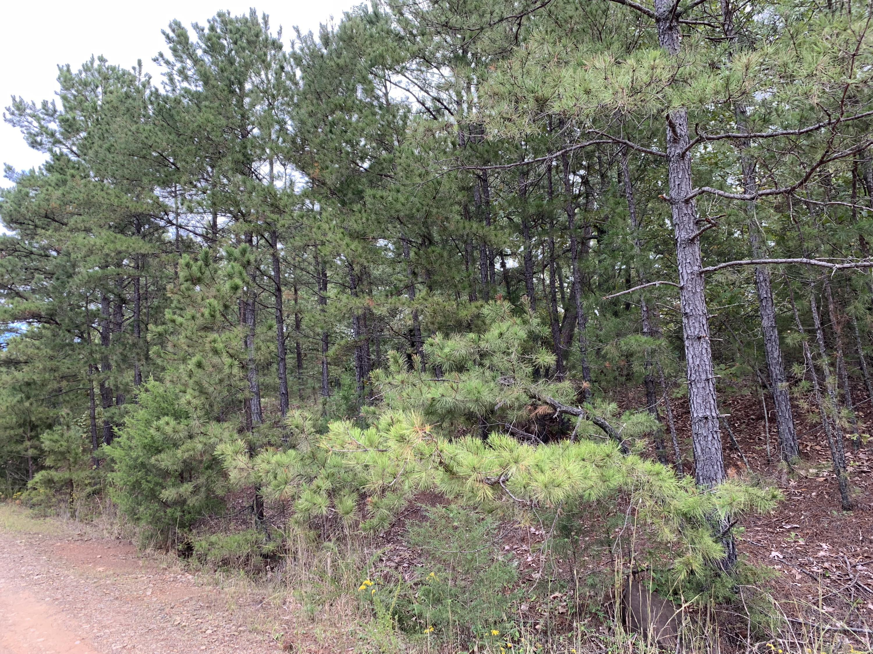 Large photo 2 of land for sale at  Bennett Orchard Estates , London, AR, listed by Coldwell Banker Premier Realty
