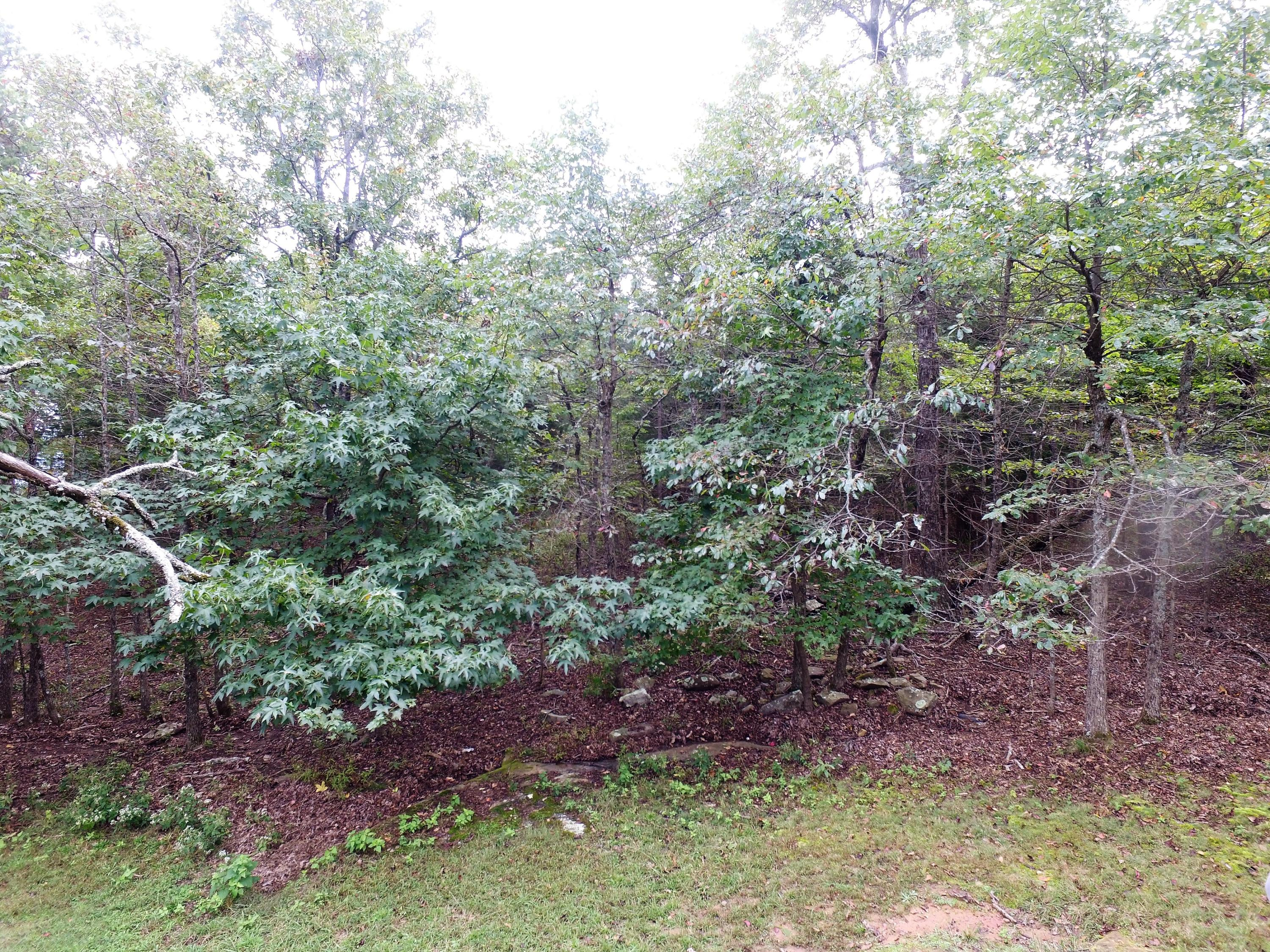 Large photo 13 of land for sale at  State 155 , Dardanelle, AR, listed by Moore And Co.