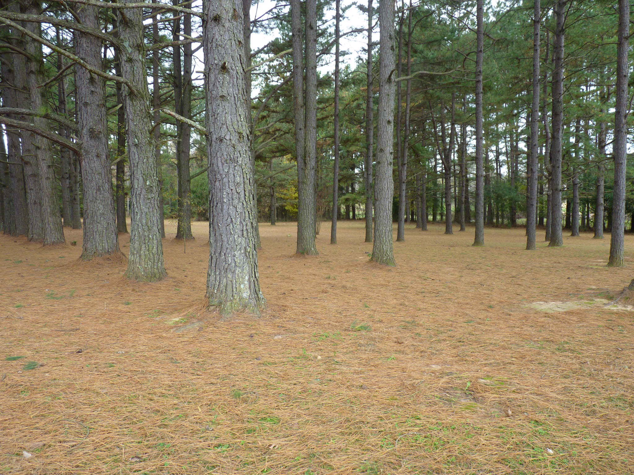 Large photo 7 of home for sale at 10182 Singing Pines Road, Danville, AR