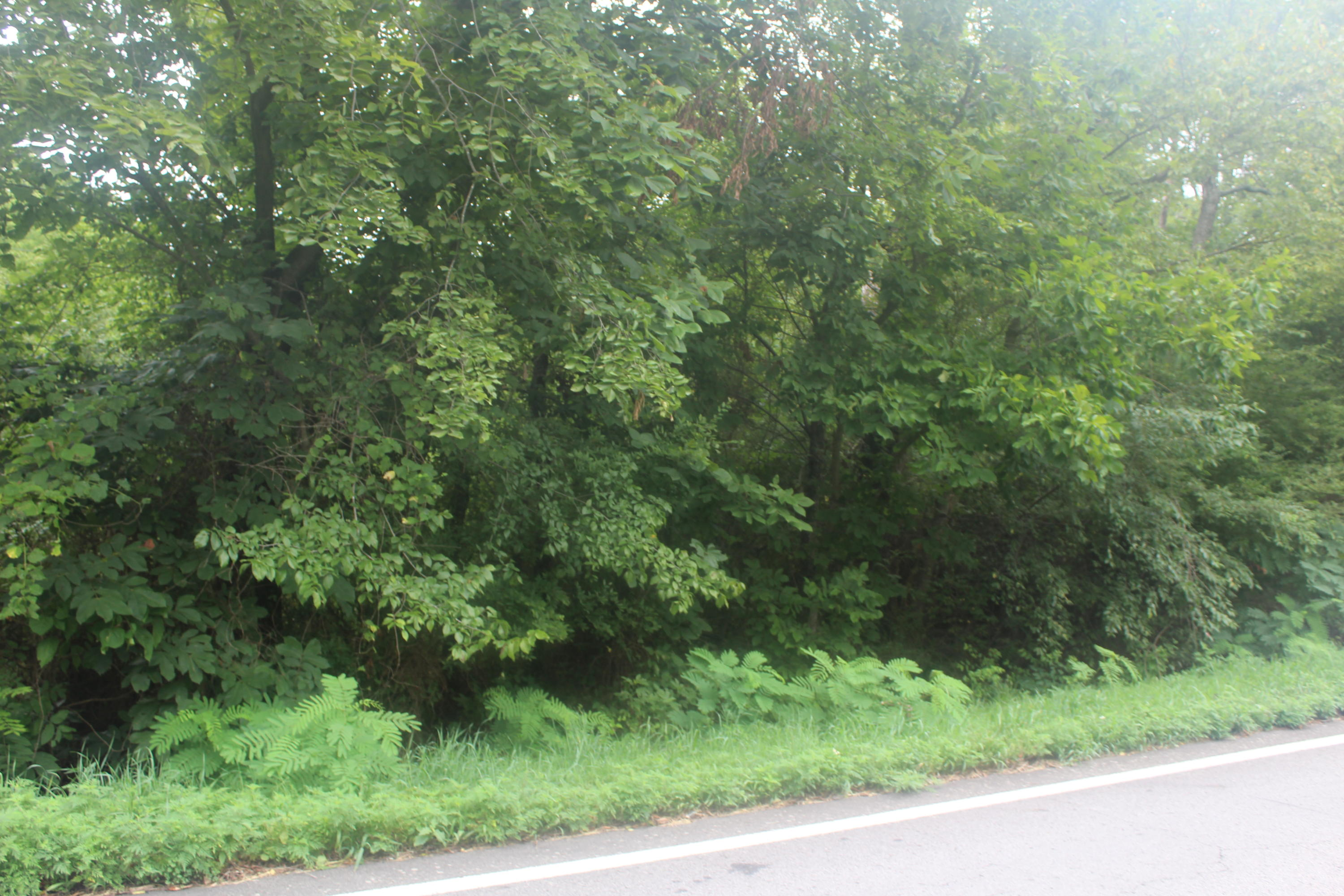 Large photo 2 of land for sale at  Hwy 164 , Coal Hill, AR, listed by Coldwell Banker Premier Realty