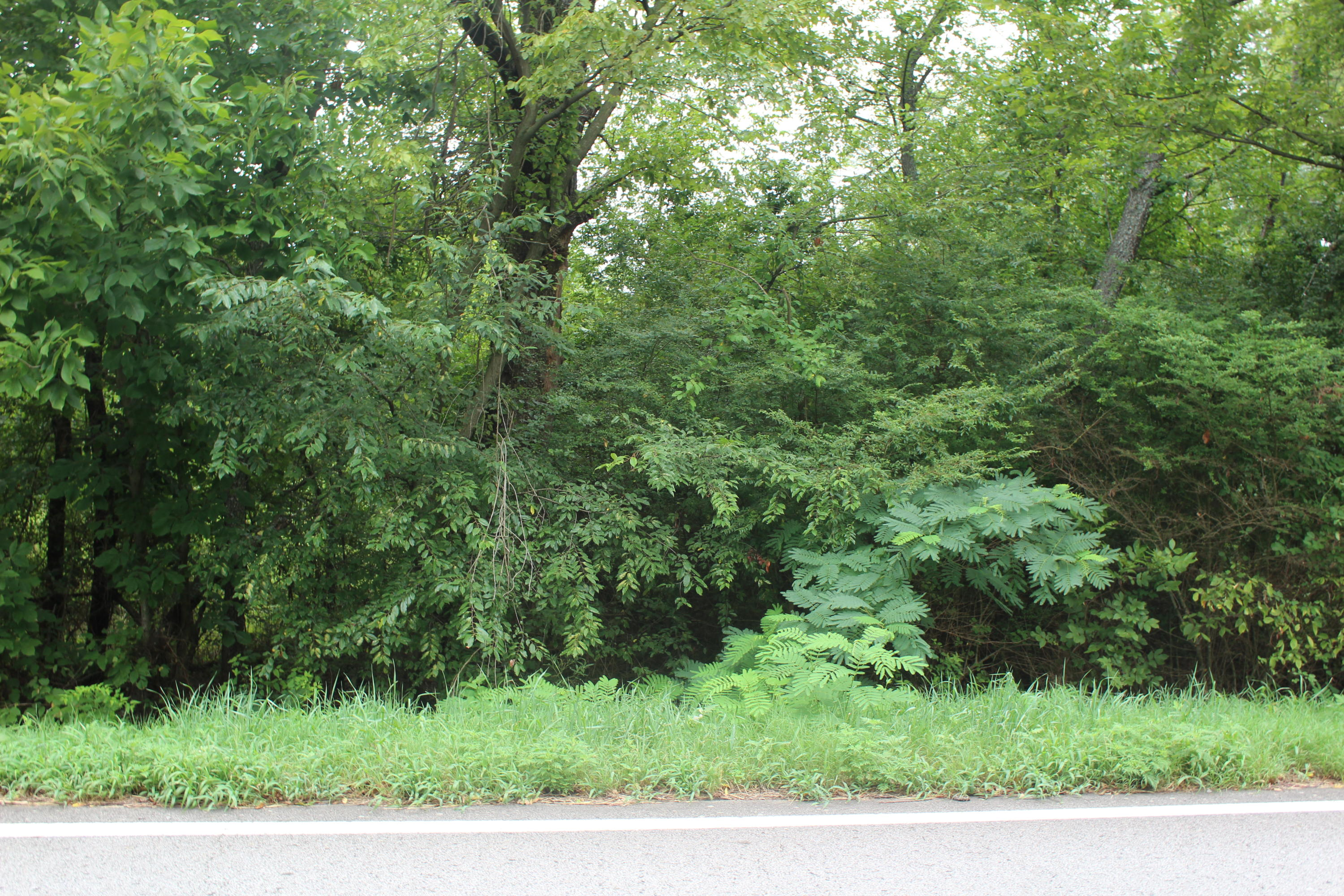 Large photo 4 of land for sale at  Hwy 164 , Coal Hill, AR, listed by Coldwell Banker Premier Realty