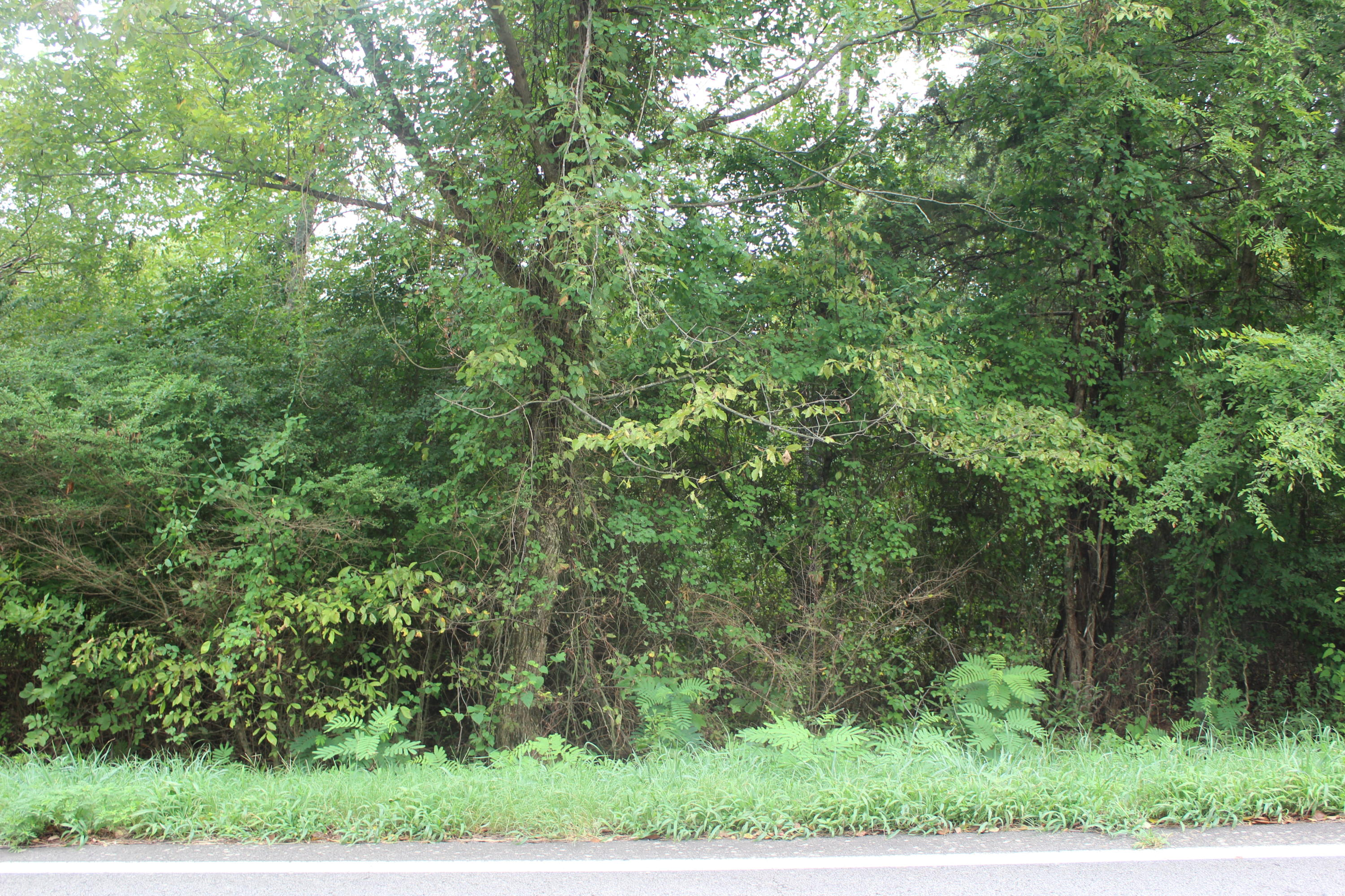 Large photo 5 of land for sale at  Hwy 164 , Coal Hill, AR, listed by Coldwell Banker Premier Realty
