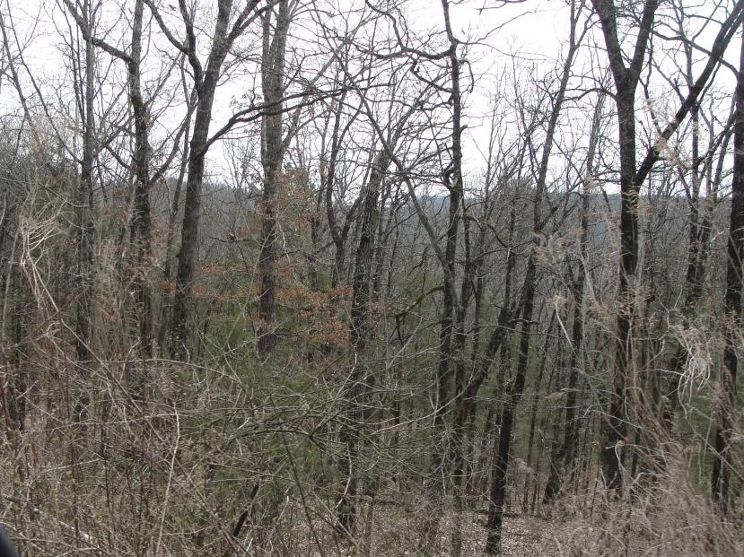 Large photo 5 of land for sale at 502 PR 3012 , Coal Hill, AR, listed by Stall & Associates Real Estate
