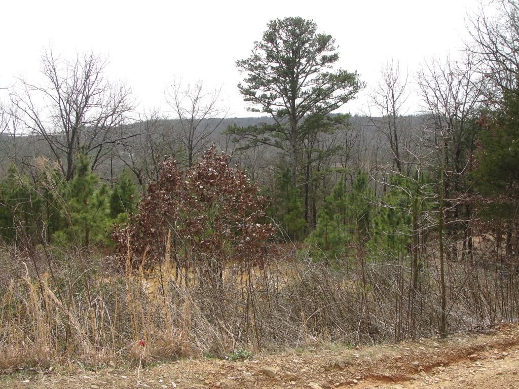 Large photo 1 of land for sale at 502 PR 3012 , Coal Hill, AR, listed by Stall & Associates Real Estate
