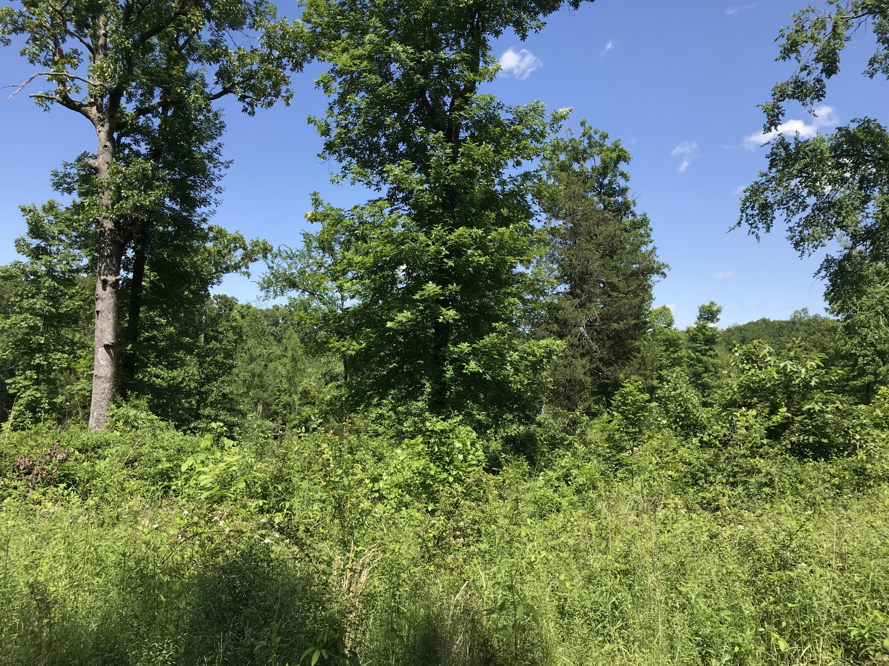 Large photo 2 of land for sale at  Cloverleaf Loop , Dardanelle, AR, listed by The Realty Place, Inc.