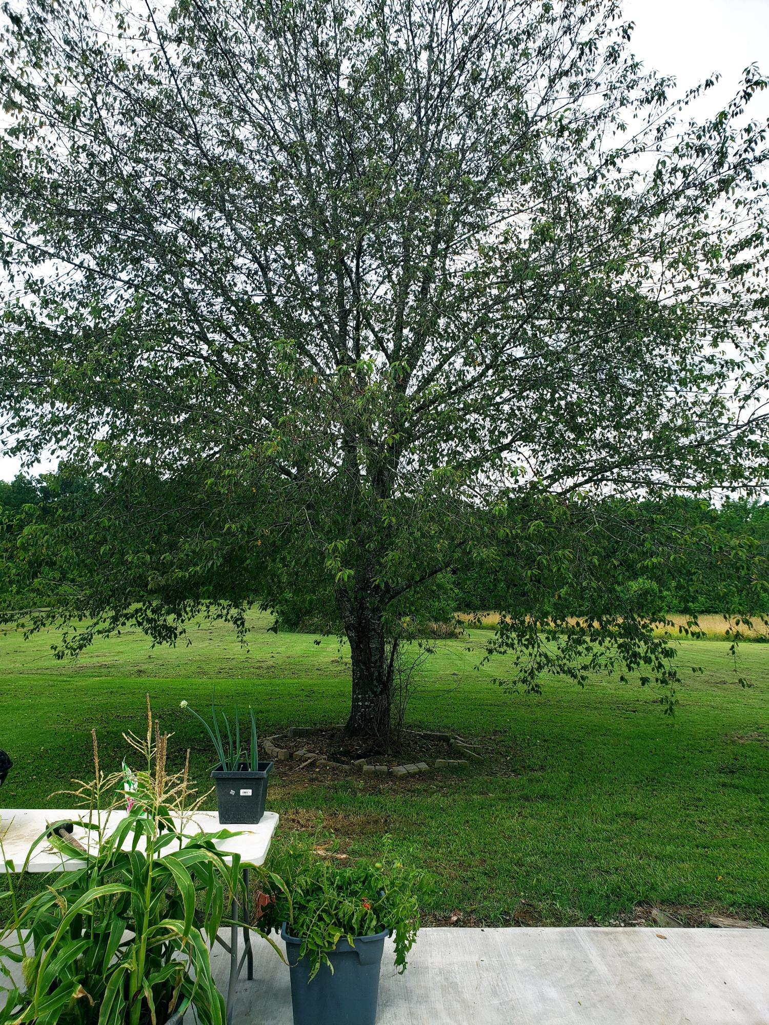 Large photo 60 of home for sale at 12577 Dale Bend Road, Danville, AR