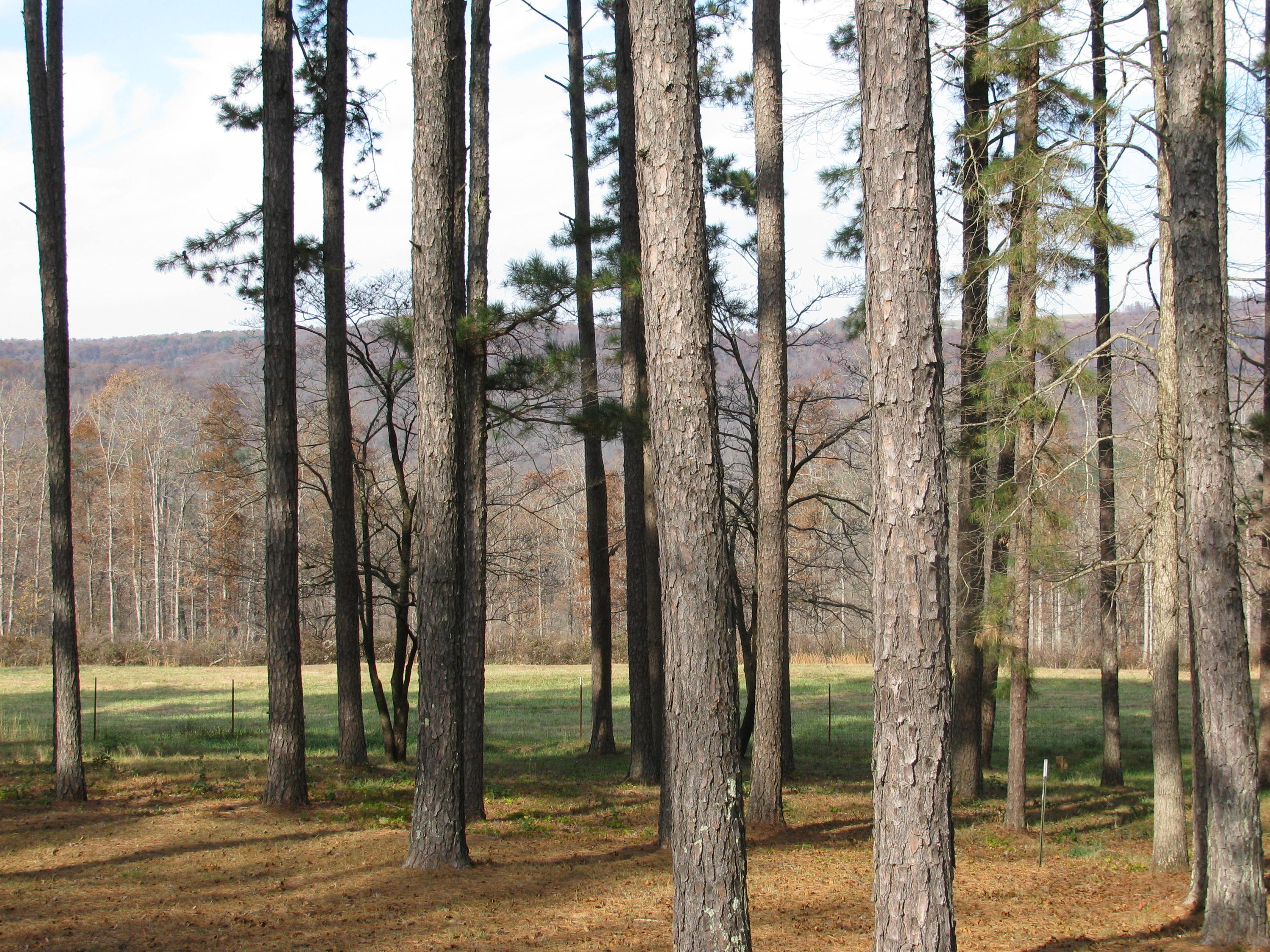 Large photo 19 of home for sale at 2410 Dabney Road, Jerusalem, AR