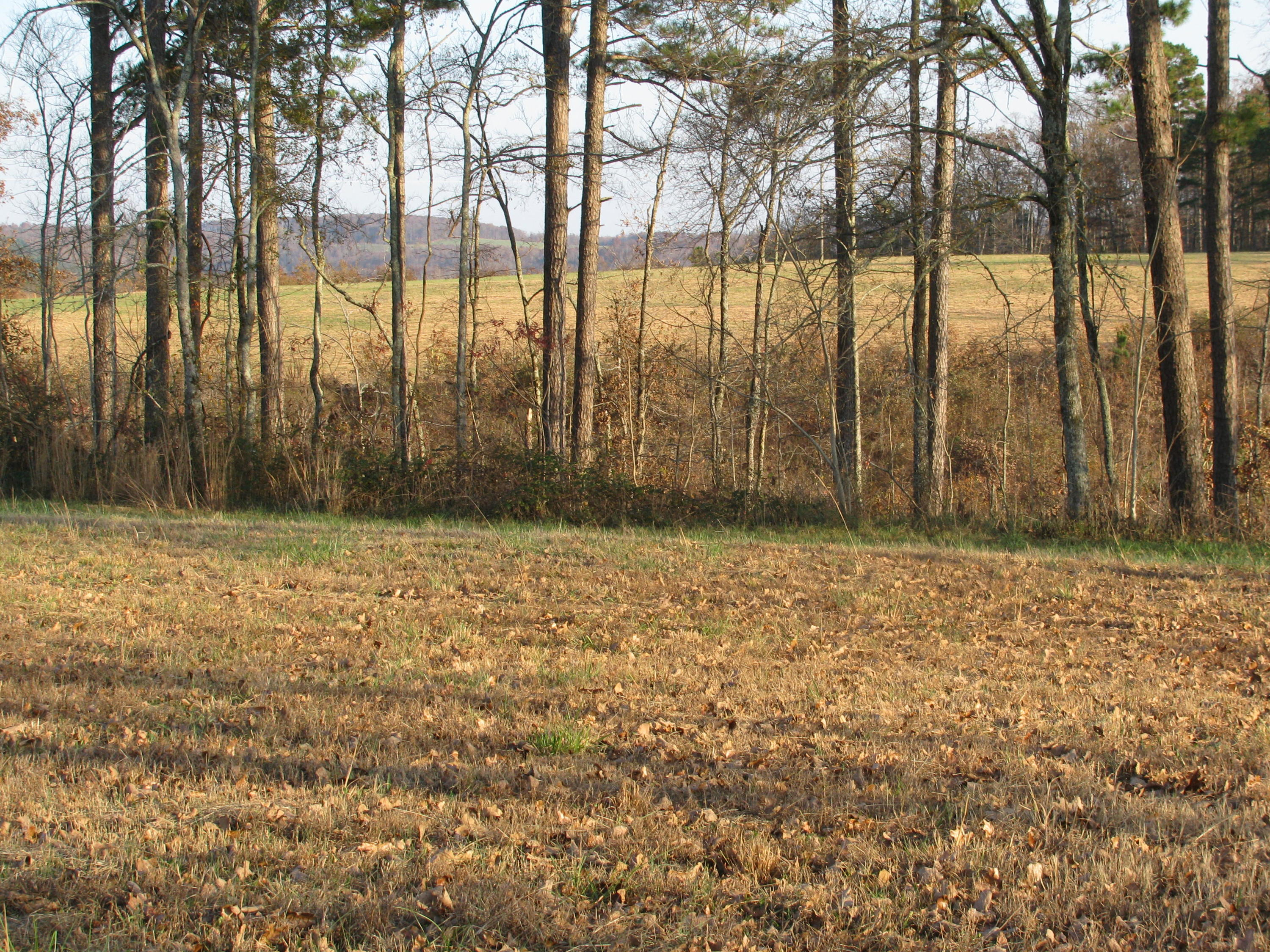 Large photo 79 of home for sale at 2410 Dabney Road, Jerusalem, AR