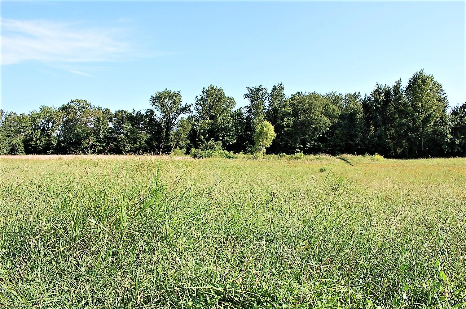 Large photo 71 of home for sale at 753 Hutcherson Road, Russellville, AR