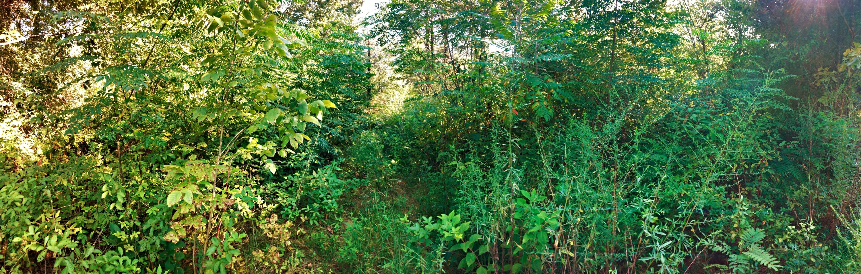 Large photo 5 of land for sale at 0 State Highway 155 , Dardanelle, AR, listed by Coldwell Banker James R. Ford
