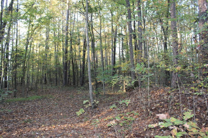 Large photo 2 of land for sale at  Jenkins Pines Lakefront , Dardanelle, AR, listed by RE/MAX FIRST