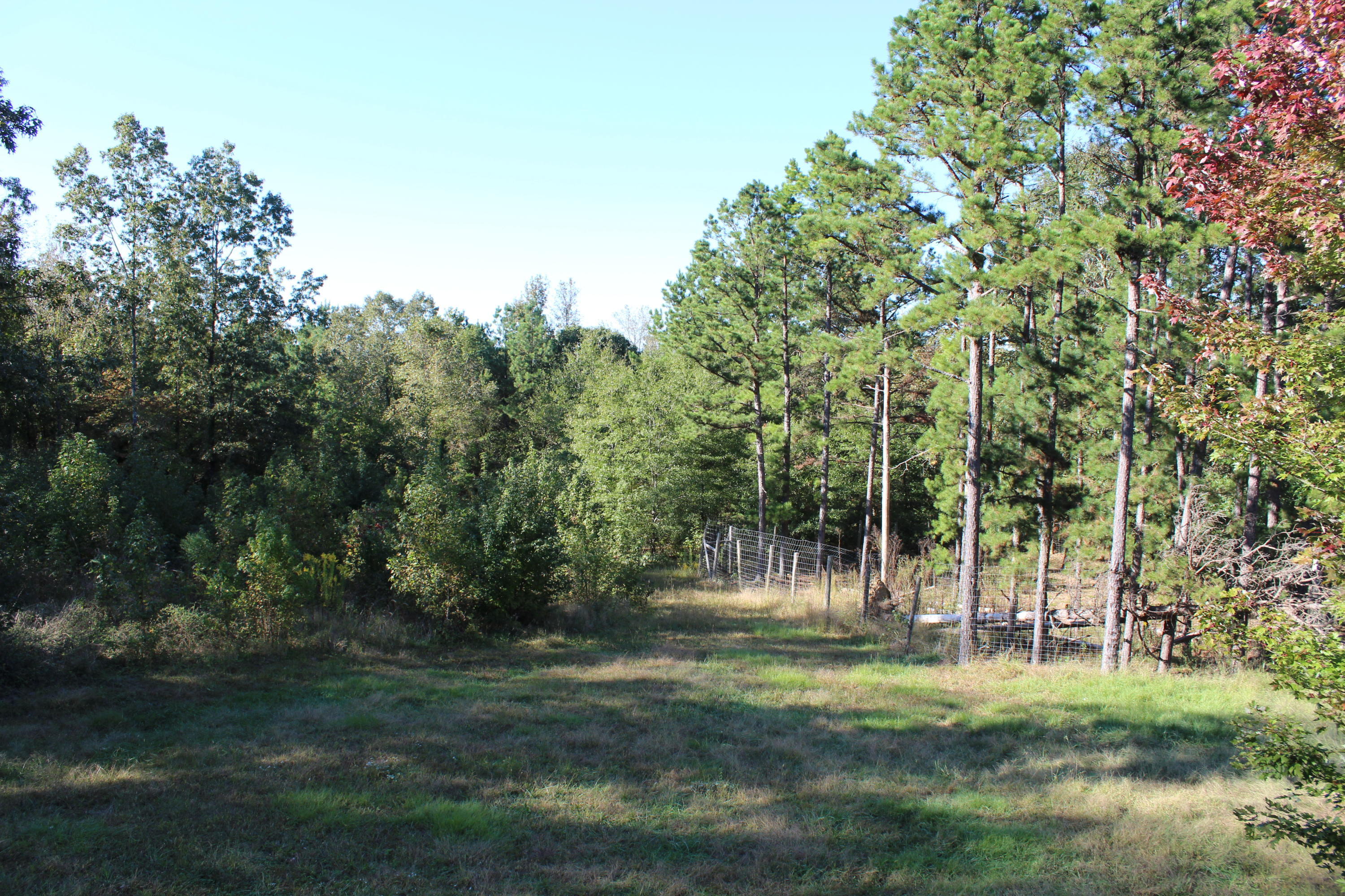 Large photo 8 of home for sale at 1254 Crooked Branch Road, Dover, AR