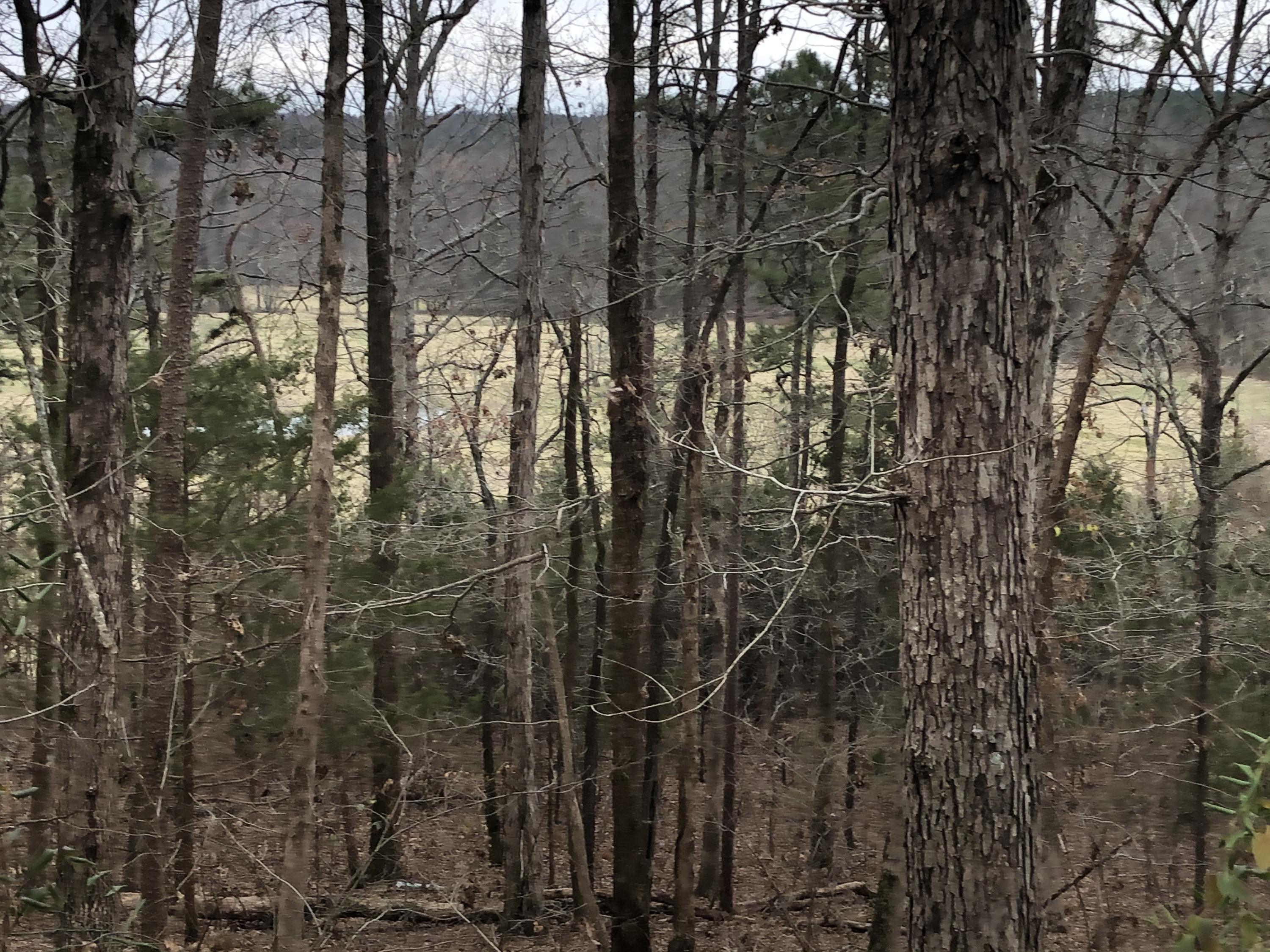 Large photo 13 of home for sale at 2088 Whorton Mountain Road, London, AR