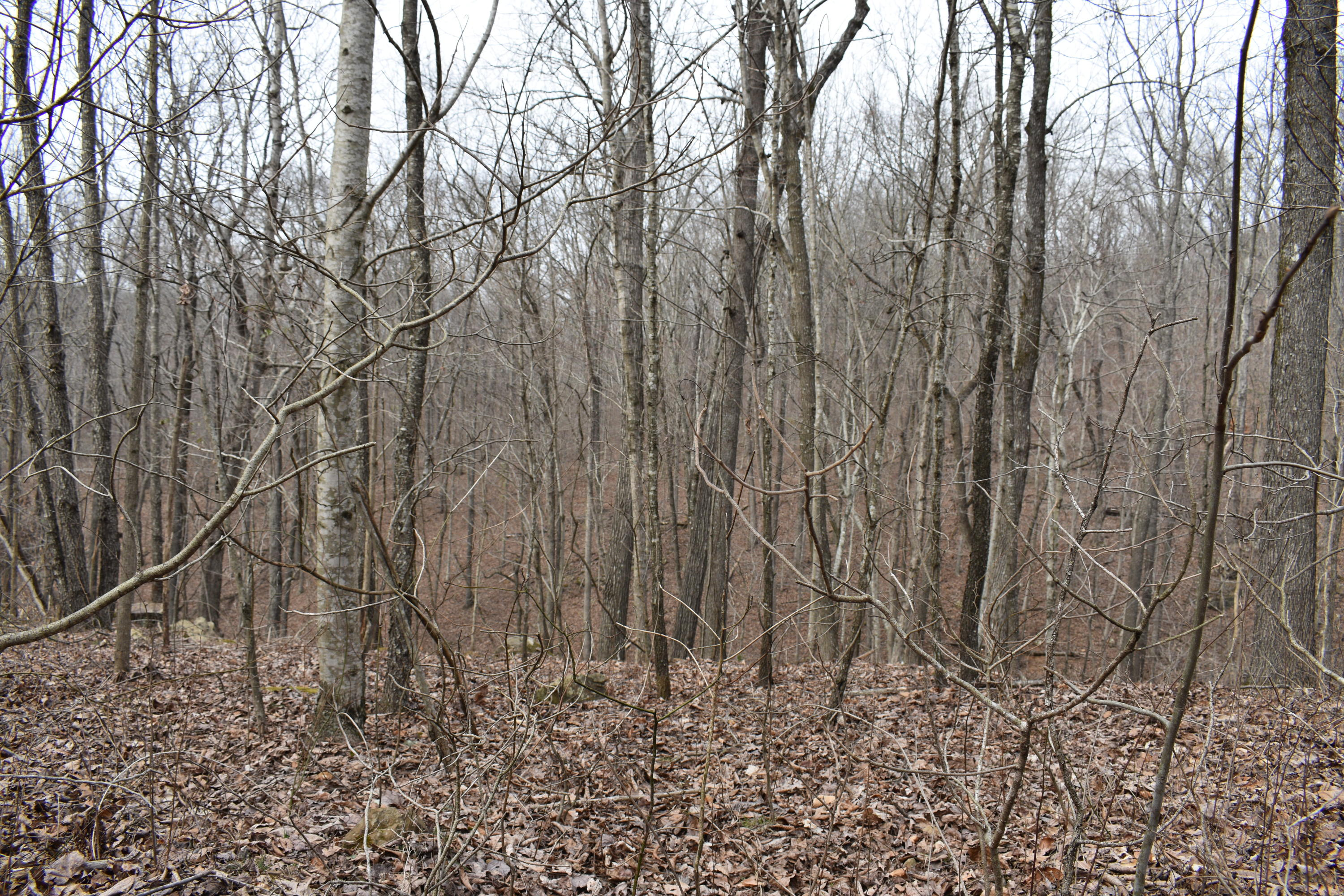 Large photo 24 of land for sale at 5867 Co Rd 4160 , Oark, AR, listed by Coldwell Banker Premier Realty