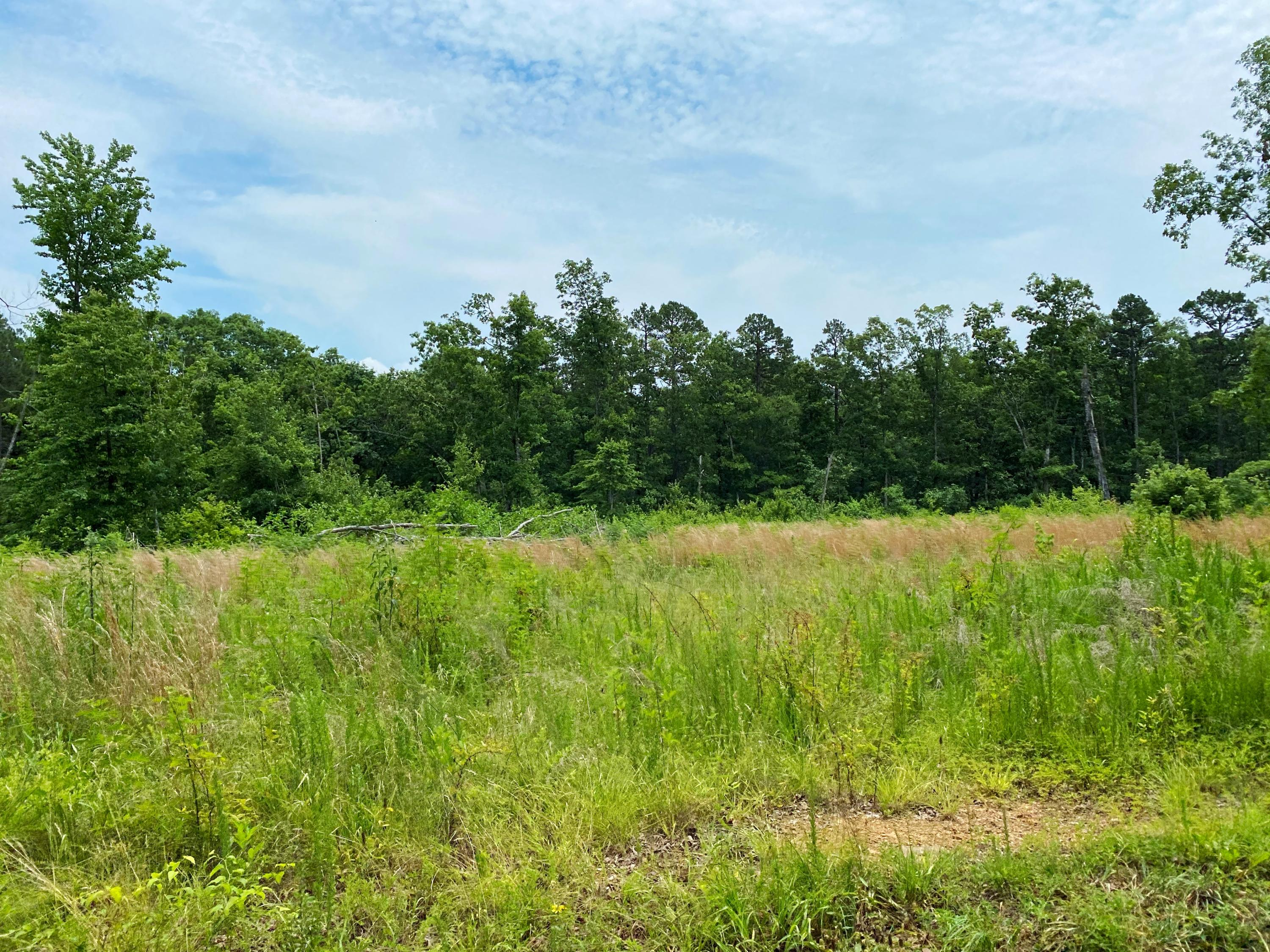 Large photo 79 of home for sale at 9061 AR-16 , Clinton, AR
