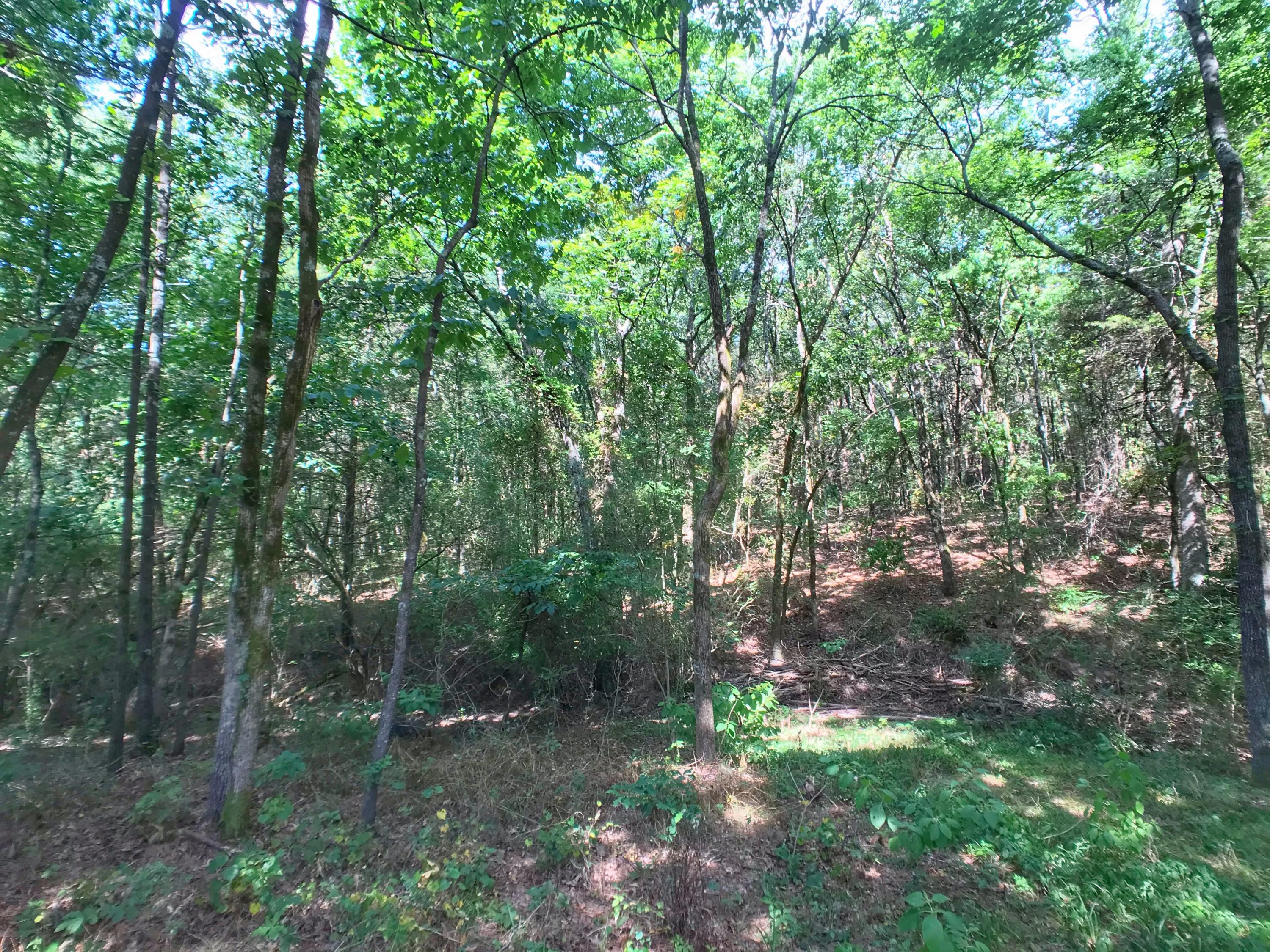 Large photo 25 of home for sale at 1730 Dwight Mission Road, Russellville, AR