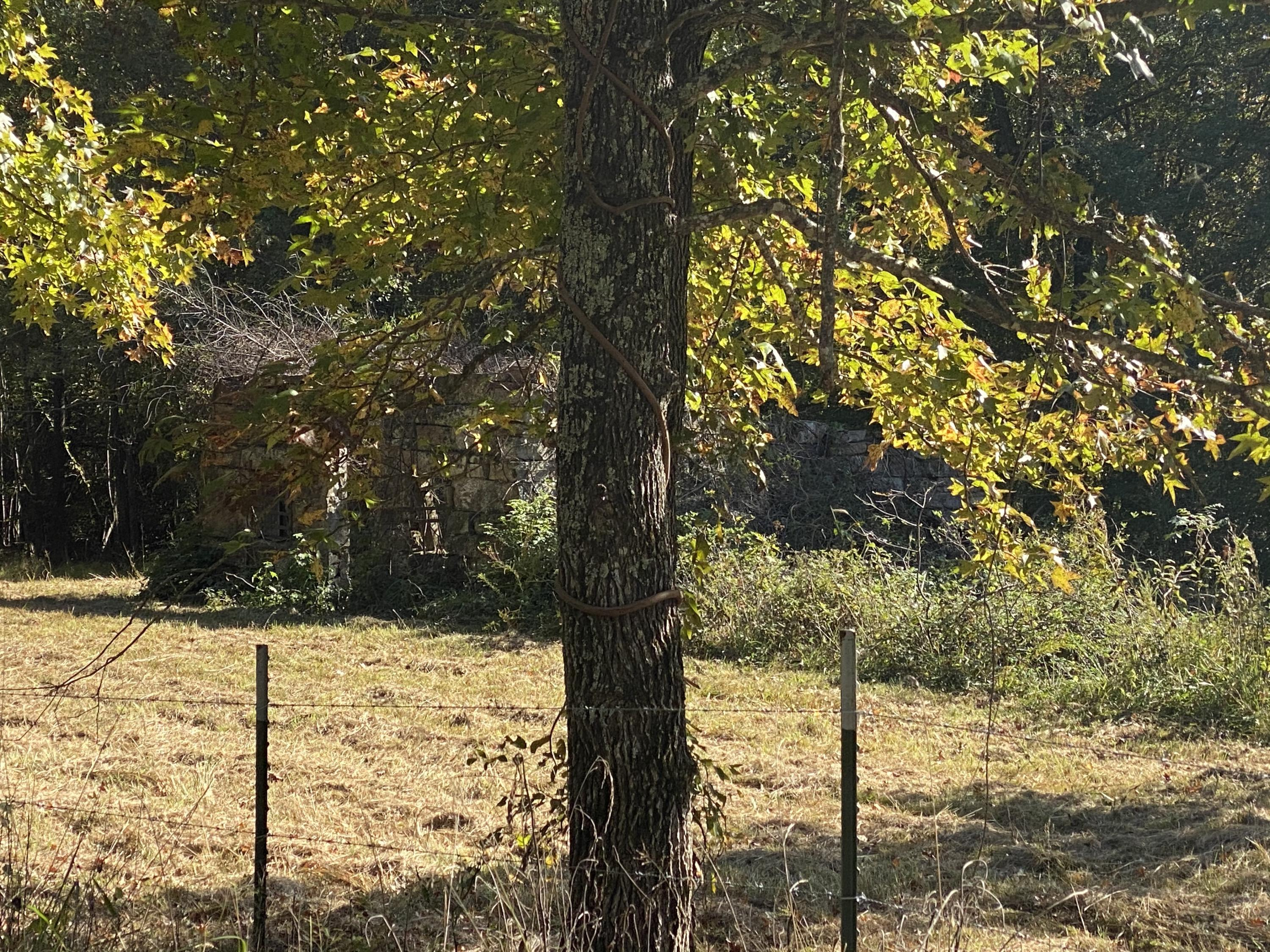 Large photo 61 of home for sale at 665 Star Lane, Hector, AR
