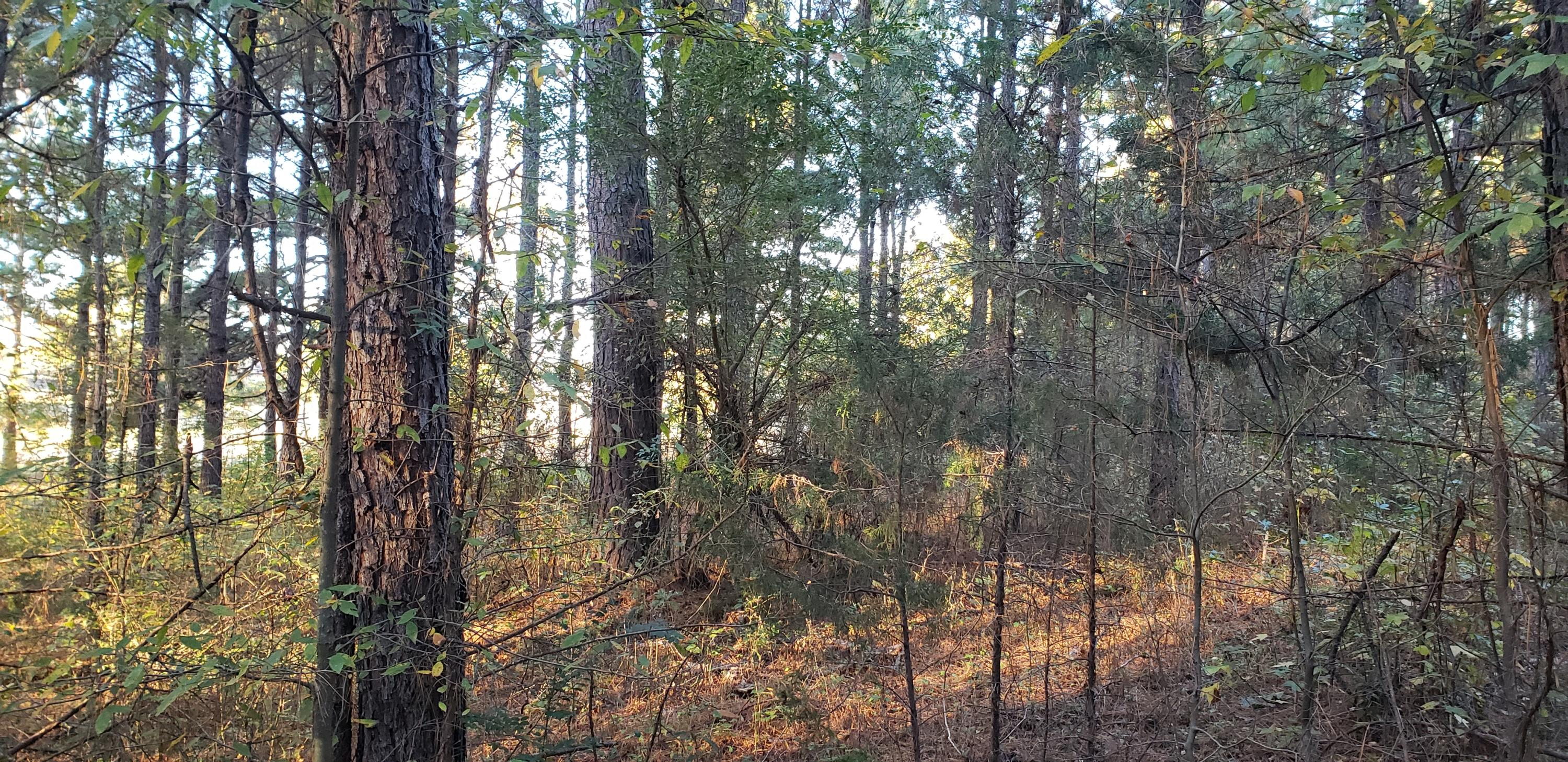 Large photo 5 of home for sale at 1347 AR-27 , Dover, AR