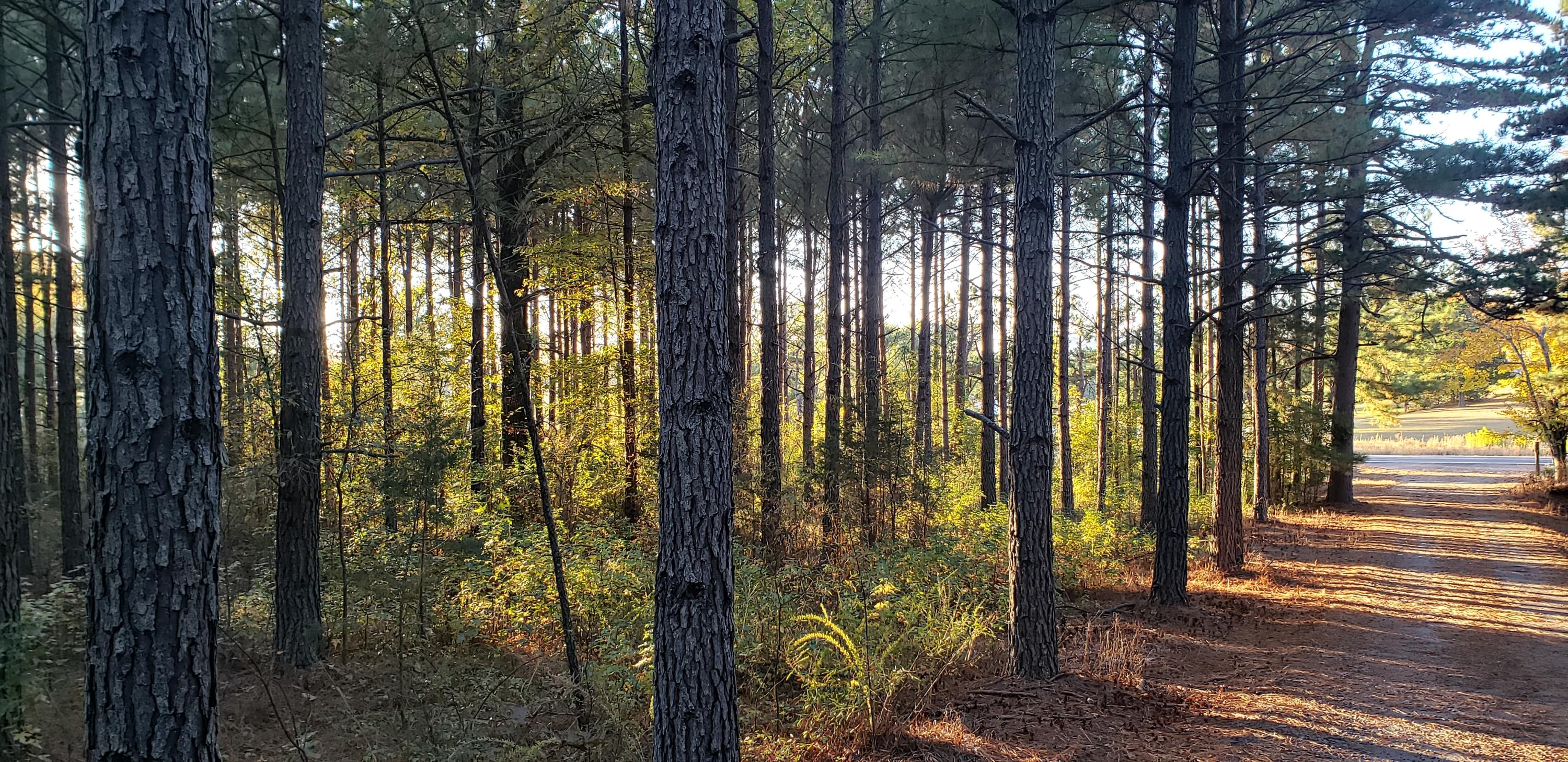 Large photo 10 of home for sale at 1347 AR-27 , Dover, AR