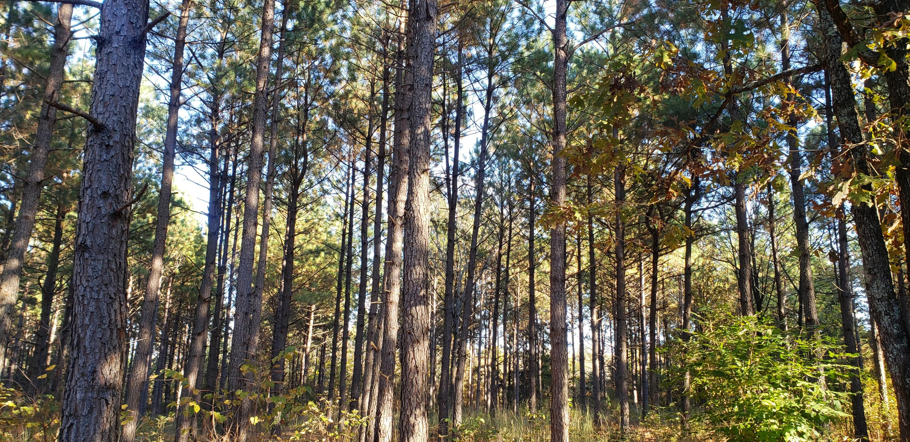 Large photo 54 of home for sale at 1347 AR-27 , Dover, AR