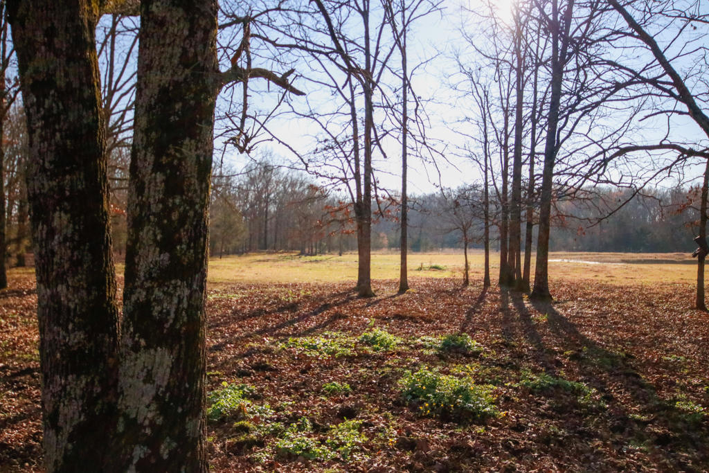 Large photo 117 of home for sale at 20 Blankenship Drive, Conway, AR