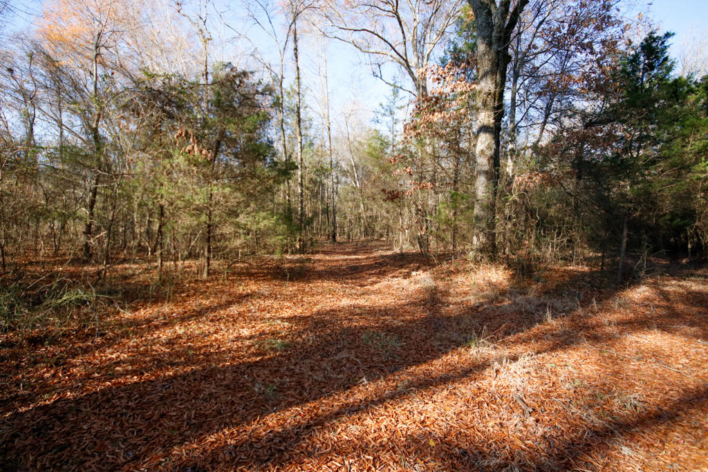 Large photo 110 of home for sale at 20 Blankenship Drive, Conway, AR