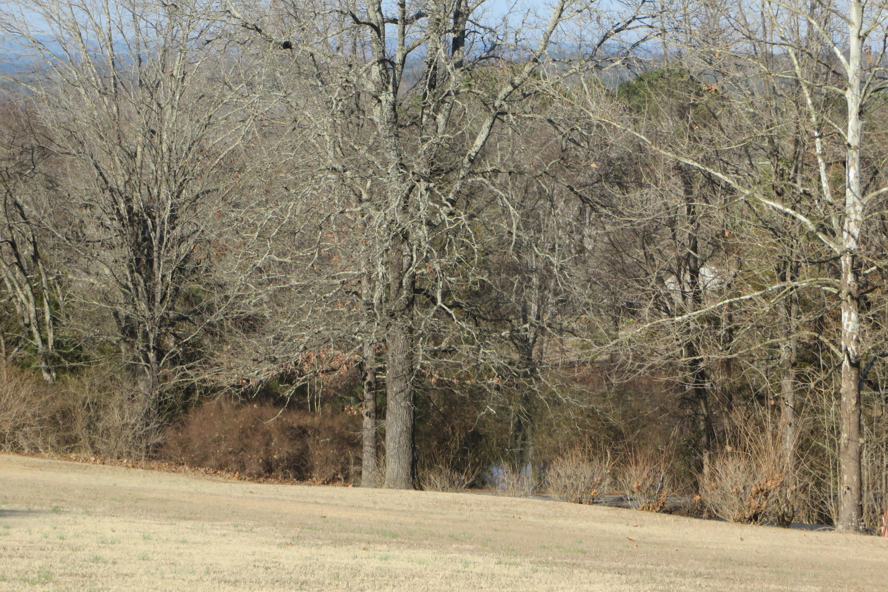 Large photo 39 of home for sale at 949 Terra Villa Road, Dover, AR