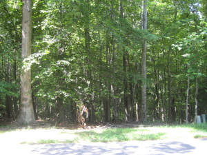 Lot 100 Woodley RD, Moneta, VA 24121