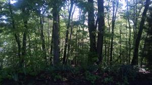 Lot 9 Cedar Bluff LN, Hardy, VA 24101
