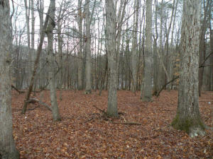 Lot 48 Silver PL, Moneta, VA 24121