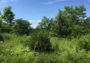 Lot 2 Bluewater DR, Moneta, VA 24121