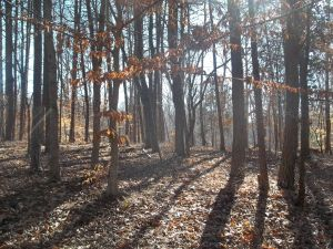 Lot 34 Long Pine CT, Moneta, VA 24121