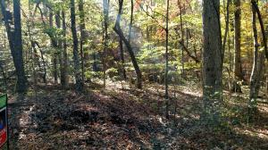 Lot 81 Summerset DR, Moneta, VA 24121