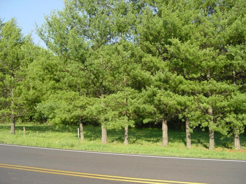 Photo of Lot 4 White House RD Moneta VA 24121