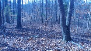 Lot 31 Long Pine CT, Moneta, VA 24121