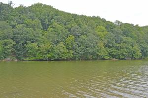Lot 81 Lakeshore Terrace RD, Hardy, VA 24101