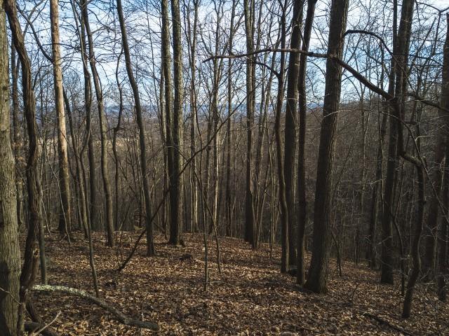 Photo of 0 Virginia ST Pearisburg VA 24134