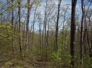 0 Danville Pike, Meadows of Dan, VA 24120