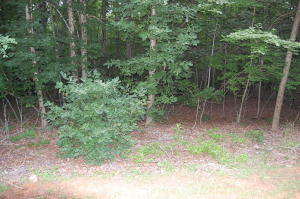 Lot 54 Gap Bridge RD, Moneta, VA 24121