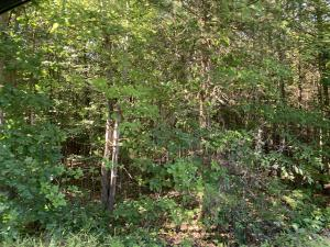 Lot 135 Forest Lawn DR, Moneta, VA 24121