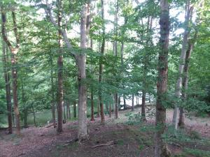 Lot 63 Driftwood CT, Moneta, VA 24121