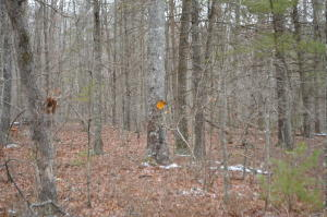 Lot 27 Royal Coachman RD, New Castle, VA 24127