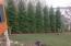 Evergreens provide privacy