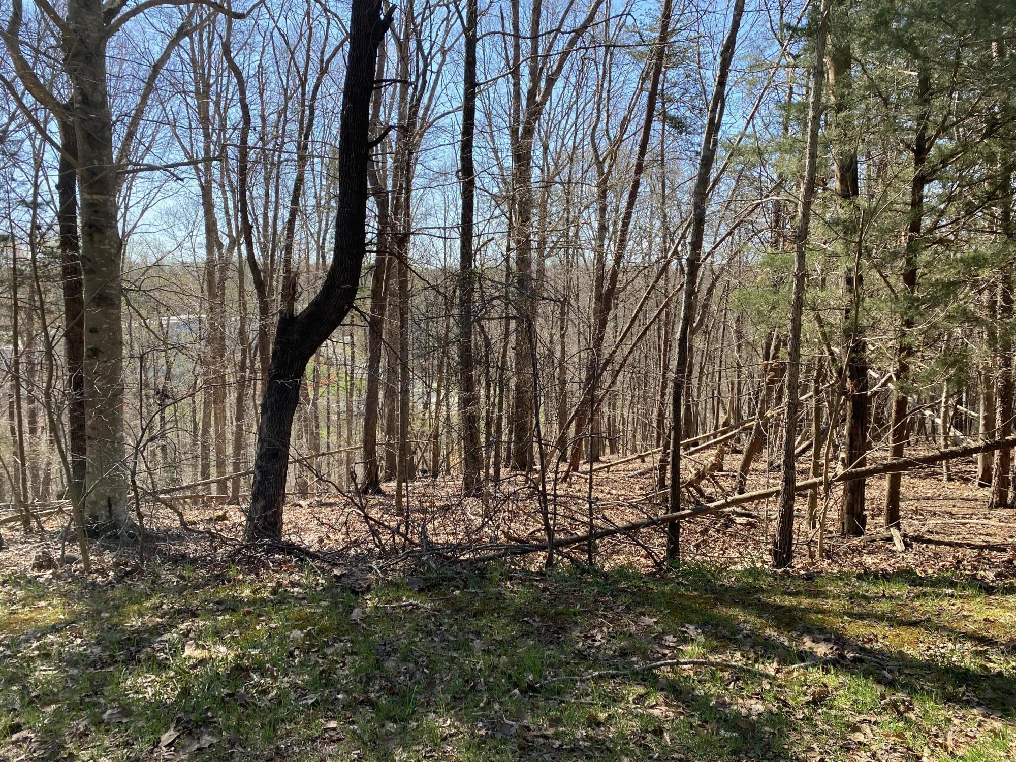 Photo of Lot 55 Shad Run DR Moneta VA 24121