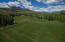 User friendly lawn for play, pets, walking, entertaining
